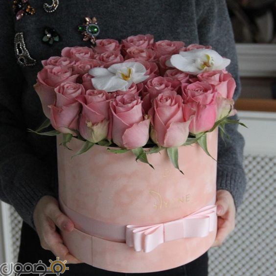 صور ورد الجوري 9 صور ورد الجوري الوردي فيس بوك