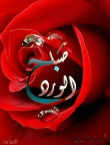صباح الورد جميلة 228x300 صور صباح الخير أسعد الله صباحكم بكل خير