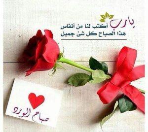 صباح الورد وردة 300x268 صور صباح الخير أسعد الله صباحكم بكل خير
