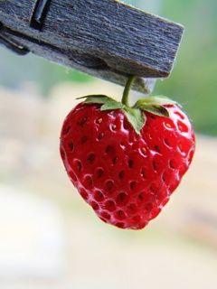 قلب فراولة صور قلوب رومانسية للفيسبوك و للتصميم غاية الروعة