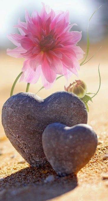 قلب وردة صور قلوب رومانسية للفيسبوك و للتصميم غاية الروعة