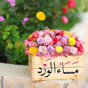 مساء الخير 3 300x300 صور مساء الخير الفل الورد للاصدقاء والاحباب
