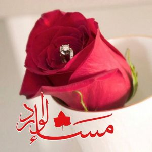 مساء الورد 300x300 صور مساء الخير الفل الورد للاصدقاء والاحباب