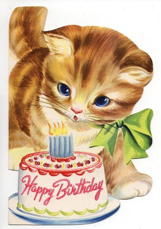 happy birthday cat بطاقات تهنئة اعياد ميلاد صور Happy birthday